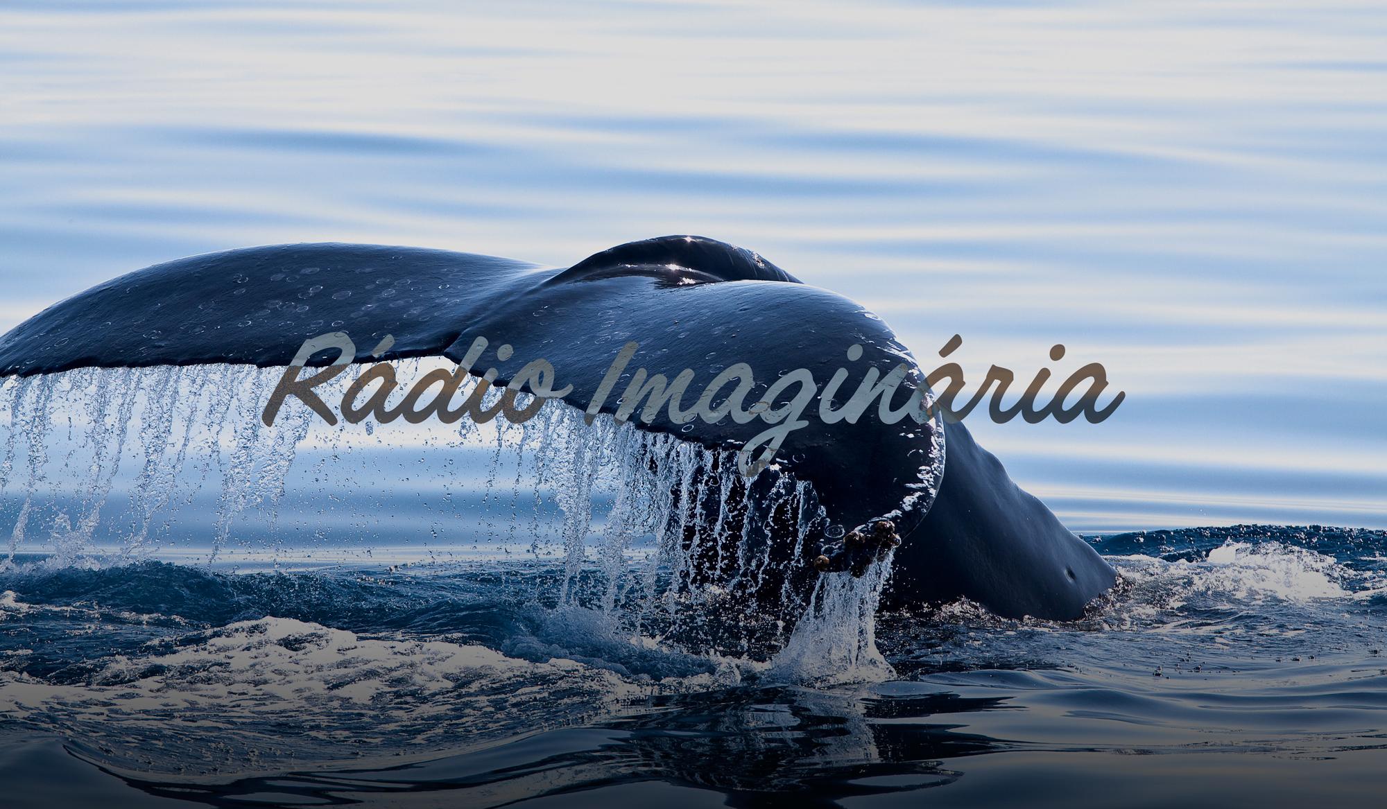 Rádio Imaginária: A Baleia